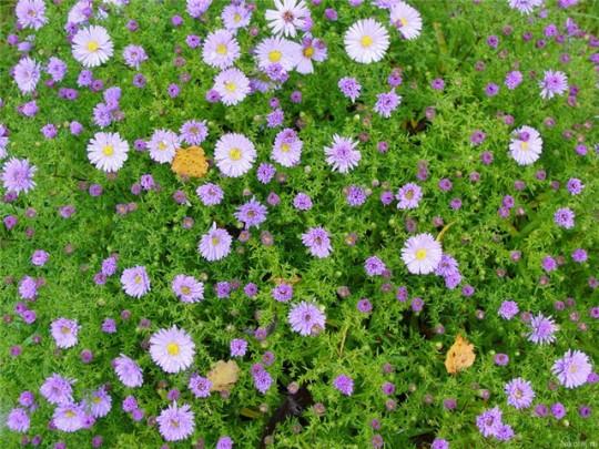 цветы как атавизм