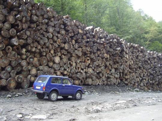 Мзымта - вырубленный лес