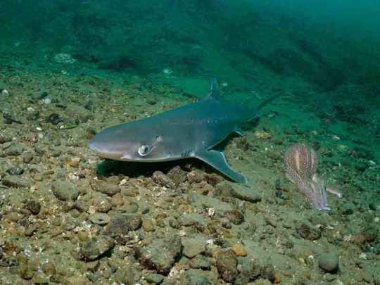 Акулы вернулись в Сочи