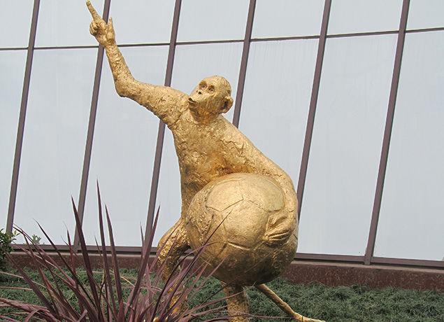 В Сочи появилась обезьяна с мячом